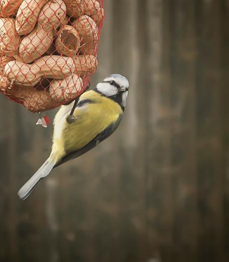 De natuurfotograaf weet: om van natuur te genieten, hoef je echt de tuin niet uit