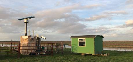 Radar onthult: polderspreeuwen daten massaal in Oostvaardersplassen