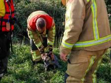 Brandweerlieden halen hond uit het water in Geldrop