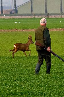 Jagers waarschuwen: forse toename aantal reeën dus meer kans op aanrijdingen