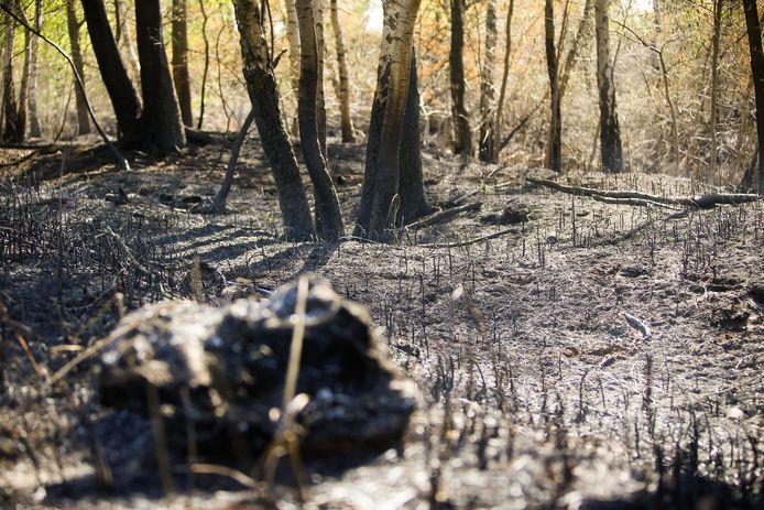 800 hectare Deurnsche Peel is verwoest door een brand die dagenlang woedde. Het zal er nog weken smeulen.