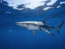Jongen (12) aangevallen door haai, Egypte sluit duiklocatie