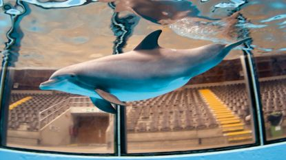"""Ook bioloog Midas Dekkers zet dolfijn als eerste op zwarte lijst: """"Sluit dat circus liever vandaag dan morgen"""""""