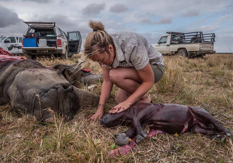 Een dierenarts bij de gedode neushoorn en haar ongeboren kalfje.