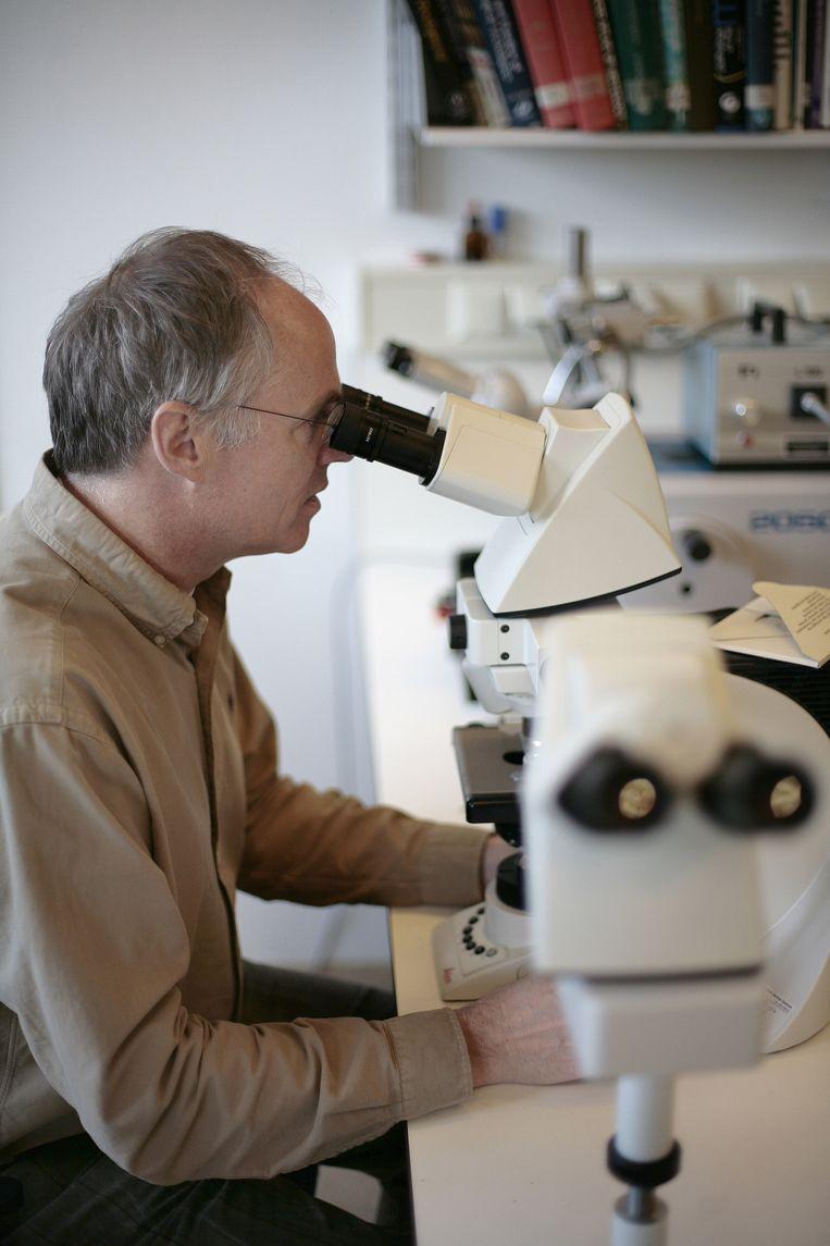 Hans Clevers in 2009 aan het werk in het laboratorium. Beeld Bart Mühl
