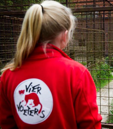 Getraumatiseerde Syrische tijgers aangekomen in Friese opvang