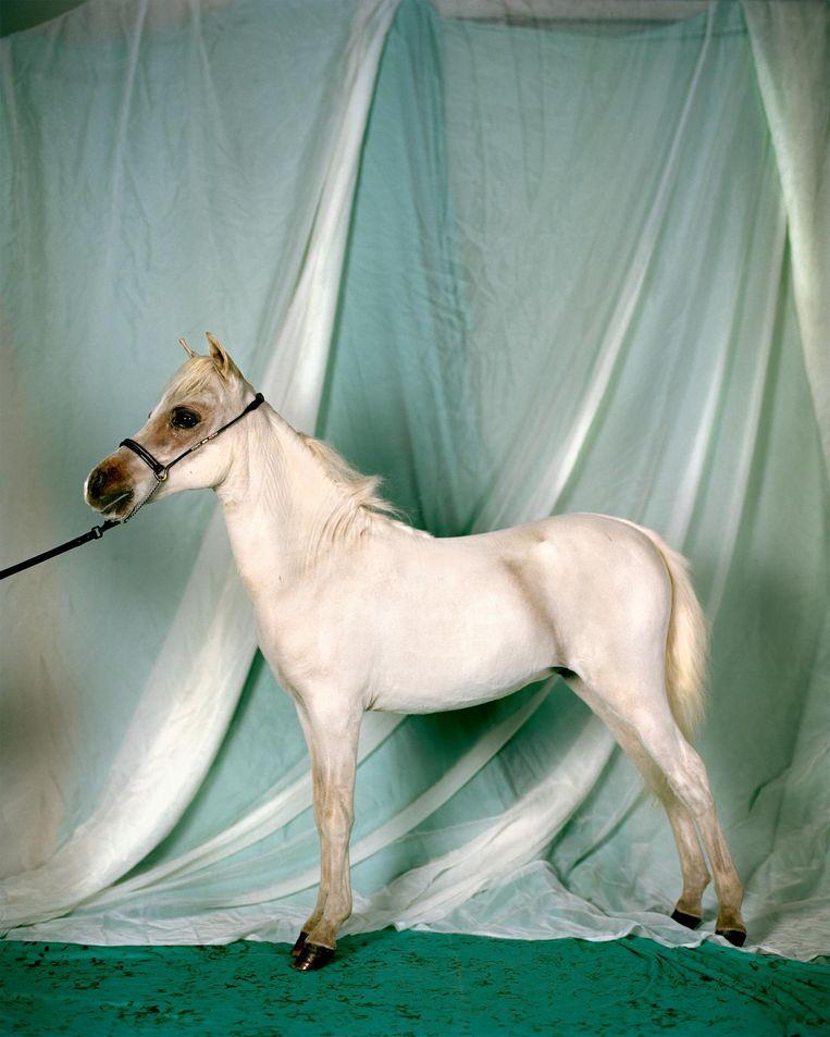 Minihorse Beeld Lana Mensic