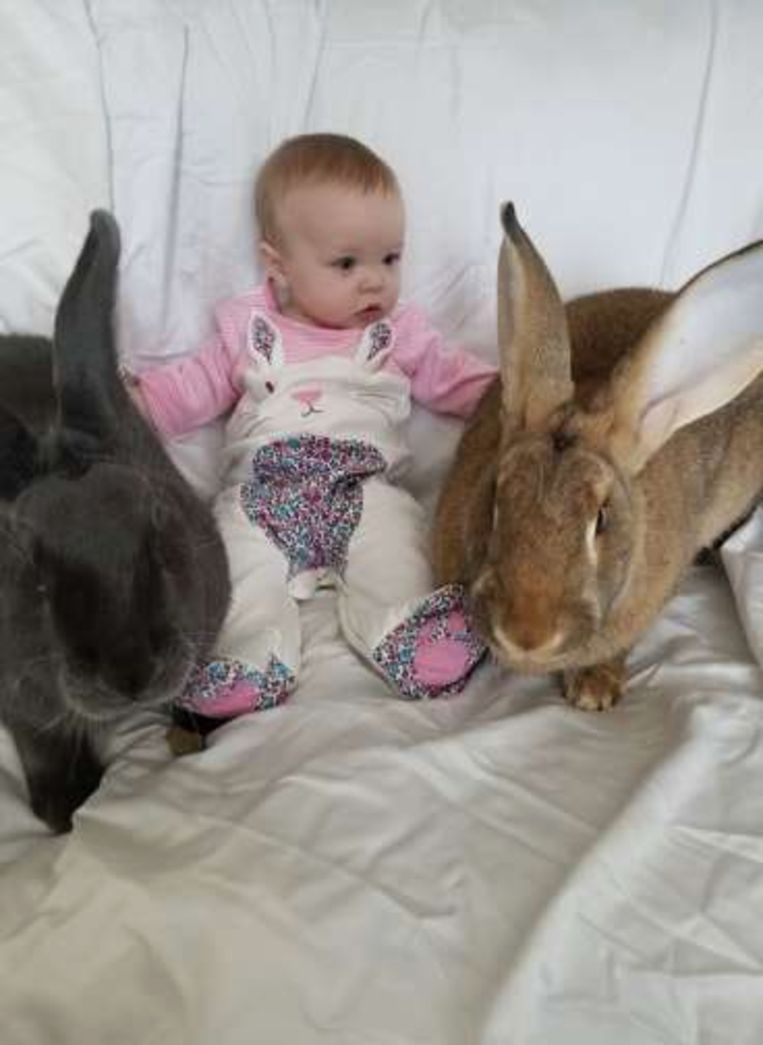 Het onafscheidelijke trio