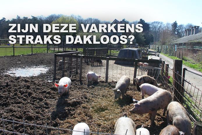 Het bedrijf van Diana Saaman met haar scharrelvarkens en, bovenin, een van de varkenshutjes. Deze bewerkte foto werd gebruikt door Varkens in Nood bij de handtekeningenactie voor Saaman.