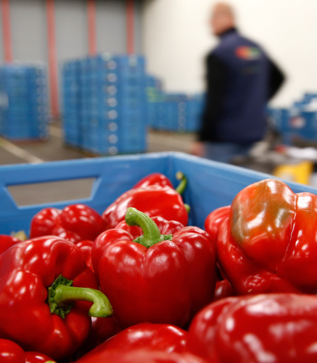 Nederlands vlees en groente populair in het buitenland