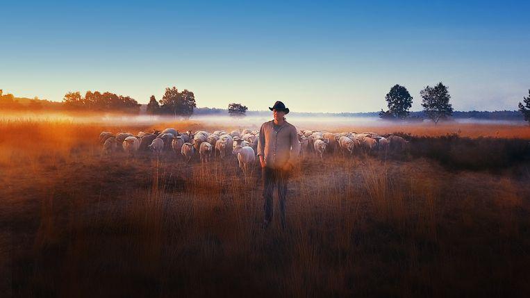 Stijn Hilgers met zijn kudde op de Brabantse heide.  Beeld Beeld uit documentaire Schapenheld.