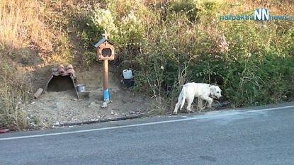 Rouwend hondje waakt al anderhalf jaar op plaats waar baasje bij ongeval omkwam