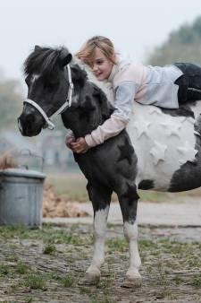 De droom van Jet (9) komt uit: pony Hugo is dé ster van de manege