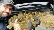 Gezin ontdekt voorraad walnoten van eekhoorns onder motorkap