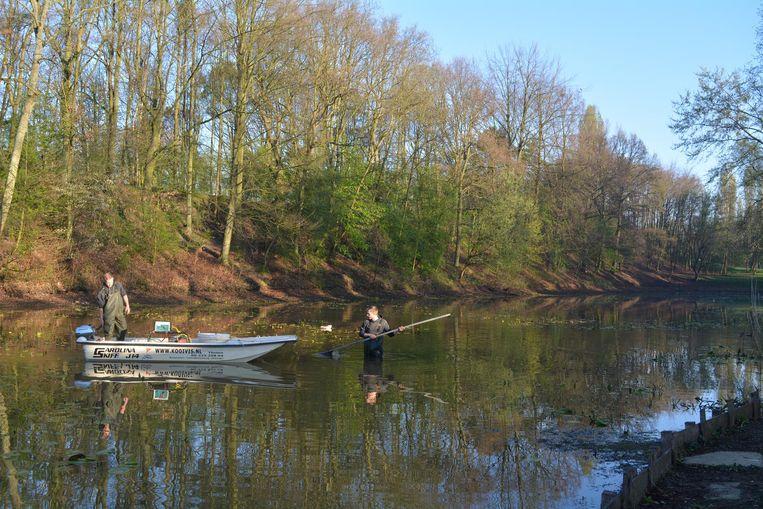 Het waterpeil in het Brilschanspark staat erg laag.