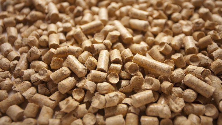 Helpt de biomassacentrale in Diemen tegen de opwarming van de aarde? Beeld Shutterstock