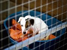 Boerin Leidschendam (79) vrijgesproken van dierenverwaarlozing