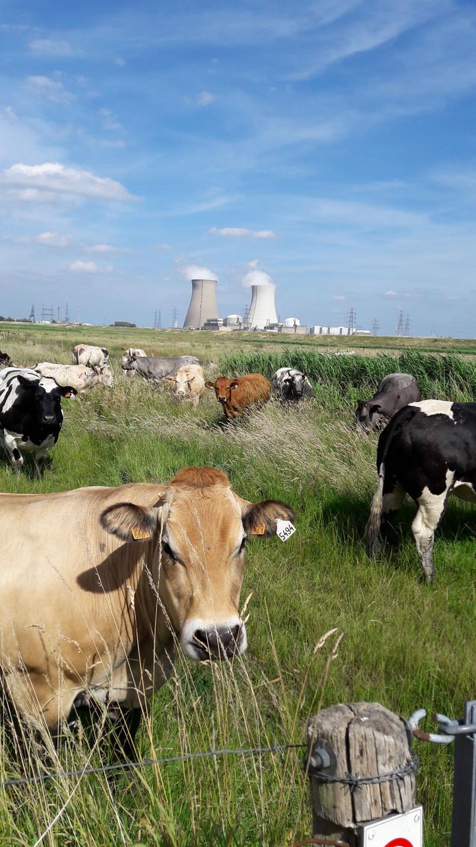De kerncentrale Doel gezien vanaf de grens.