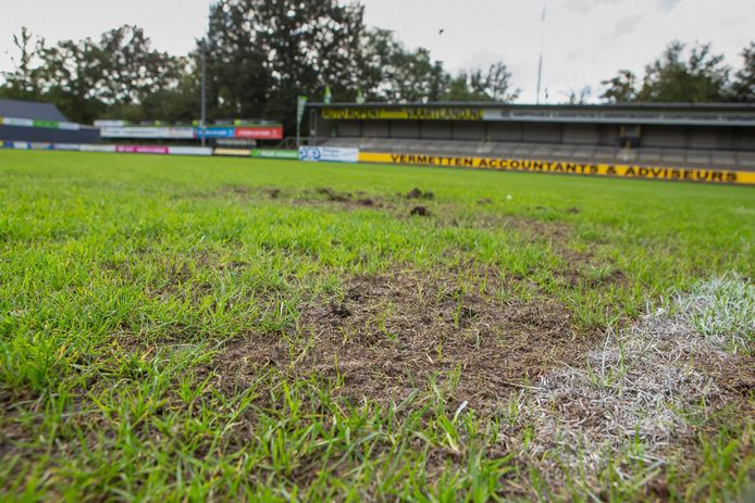 Engerlingen zijn dol op de wortels van gras. Het hoofdveld van voetbalclub Halsteren is er onbespeelbaar door geworden.