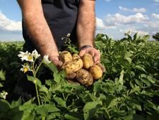 Betere aardappel is broodnodig  om aan kop te blijven