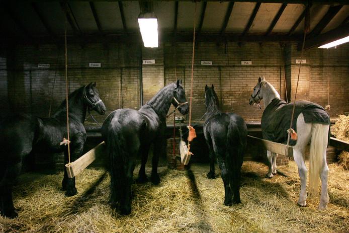Paarden in een stal, foto ter illustratie.
