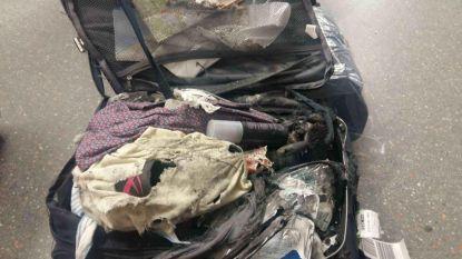 """Is je koffer ontploft?"": Britse stomverbaasd als haar bagage van de band rolt"