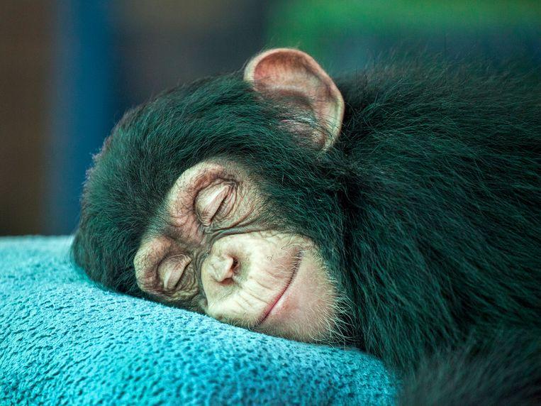 Afbeeldingsresultaat voor slapen