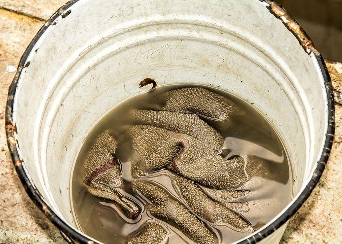 """Geregeld vers water tappen, vindt Marja Middeldorp alvast een goede tip. ,,Soms lijkt het wel bruine bonensoep."""""""