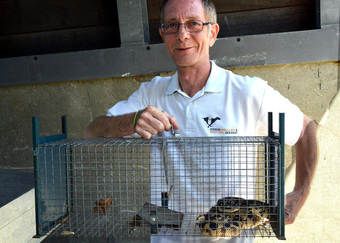 Martin Verbeek met de aangetroffen Stierslang.