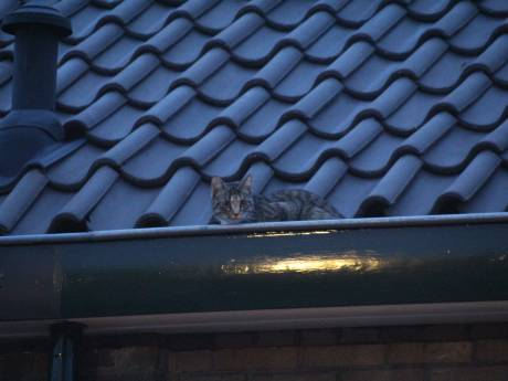 Hoogwerker nodig voor redden katje
