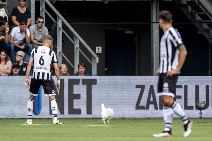 Supporters lieten zondag een kip los op het veld van Erve Asito.
