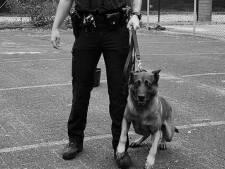 Utrechtse viervoeter Koen met pensioen als politiehond