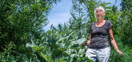 Wobby verbouwt in haar voeselbos een oude Zeeuwse groente die bijna niemand nog kent
