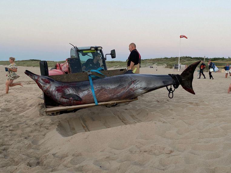 De spitssnuitdolfijn die donderdag in Nieuwpoort strandde en weer in zee werd gezet bij een ultieme reddingspoging, is alsnog aangespoeld in Wenduine.