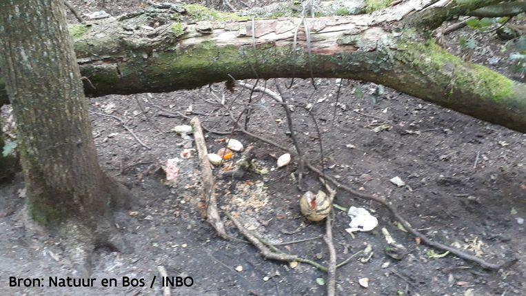 Een strop bij een voederplek in het bos, niet ver van Naya haar nest.
