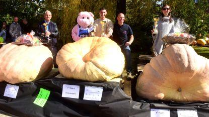 Wouter heeft dikste pompoen: 457 kg