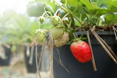 Winst Greenery lager door droogte en concurrentie