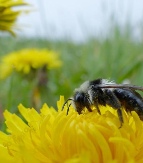 'Bloemen zaaien voor bijen? Laat liever de grasmaaier nog even in de schuur staan'