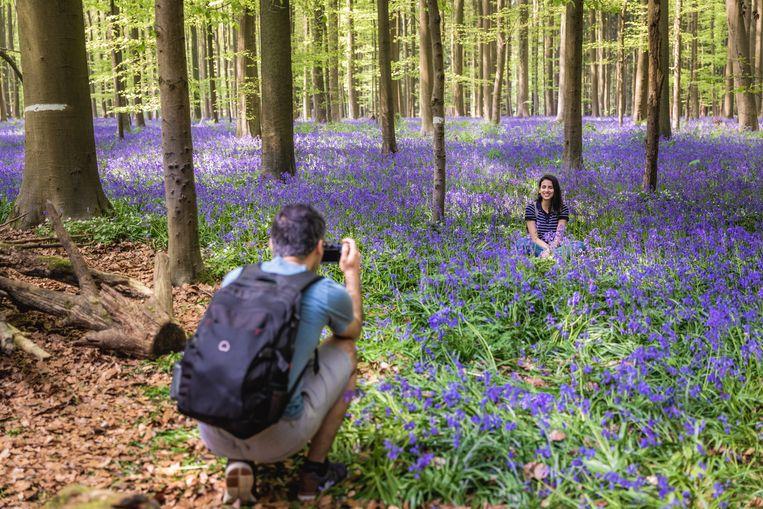 Toeristen wijken van het wandelpad af om mooie foto's te maken. Maar op die manier vertrappelen ze de hyacinten.