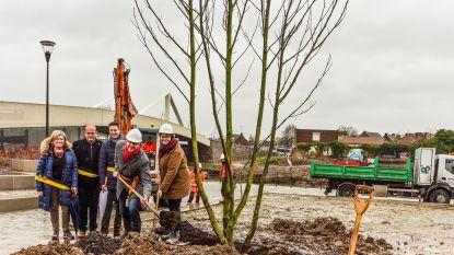 Zomereik aangeplant als symbool voor nieuwe start na Leiewerken