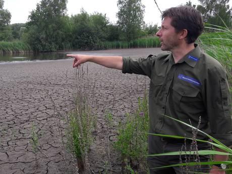 Aanhoudende droogte is rampzalig voor Kempische natuur
