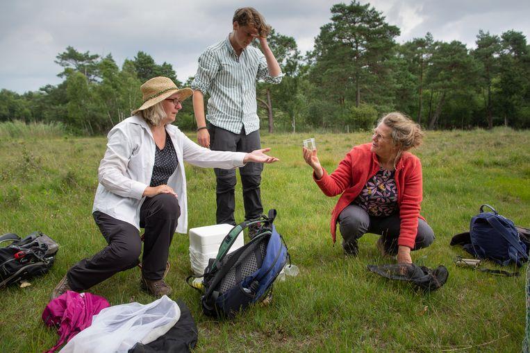 Sheila Luyten (in het rode vest) doet veldonderzoek naar het Gentiaanblauwtje. De vlinders worden gevangen met een vlindernet, even in een buisje gekoeld om tot rust te komen, gemerkt met een knipje uit de vleugel en geregistreerd. Hierna worden ze weer op planten gezet. Beeld Herman Engbers