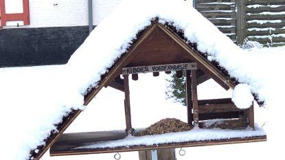"""Brugse kinderboerderij lanceert oproep na sneeuwval: """"Geef vogeltjes massaal eten"""""""