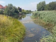 Rivierwater redding voor singels Waalsprong