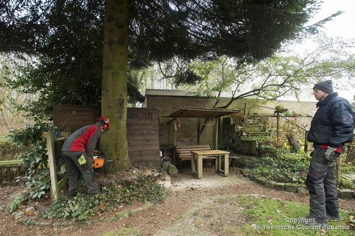 Het kappen van de boom in de tuin van Jan de Jongh heeft heel wat voeten in de aarde.