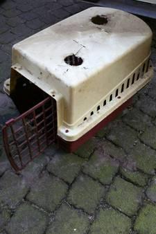 Dode kat in bench in sloot Eemnes