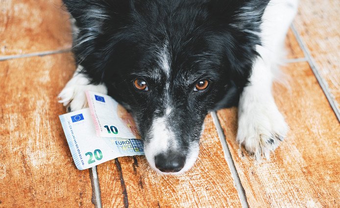 Border Collie met bankbiljetten.