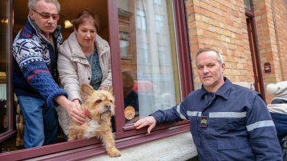 Sticker moet leven huisdieren redden