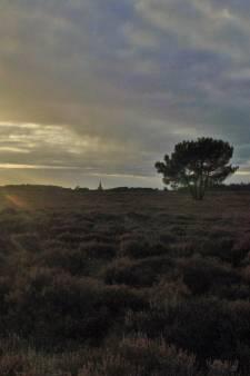 Veertien windmolens op de Leusderheide? Niet als het aan deze natuurorganisaties ligt