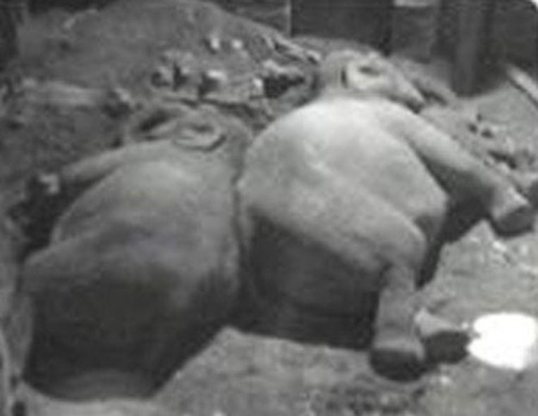 Zo slapen olifanten.